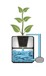 Système hydroponique aquaponie