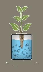Système hydroponique eau profonde