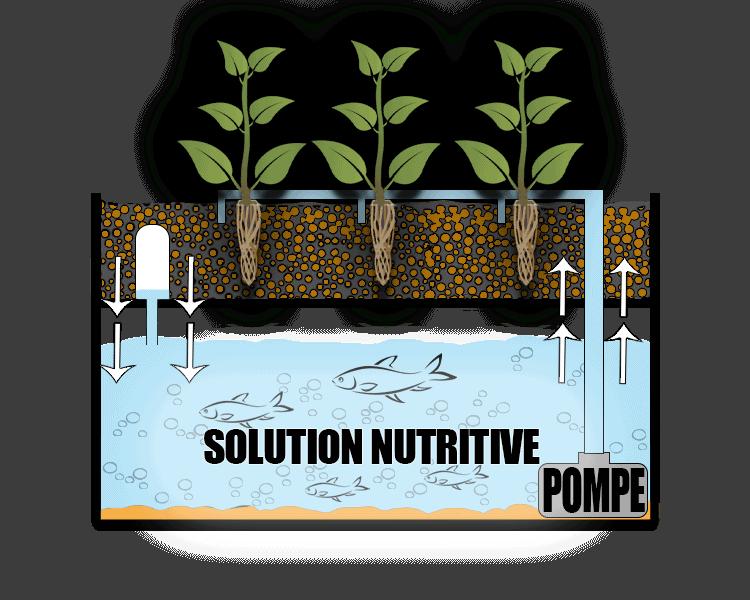 aquaponie schémas plantes et poissons